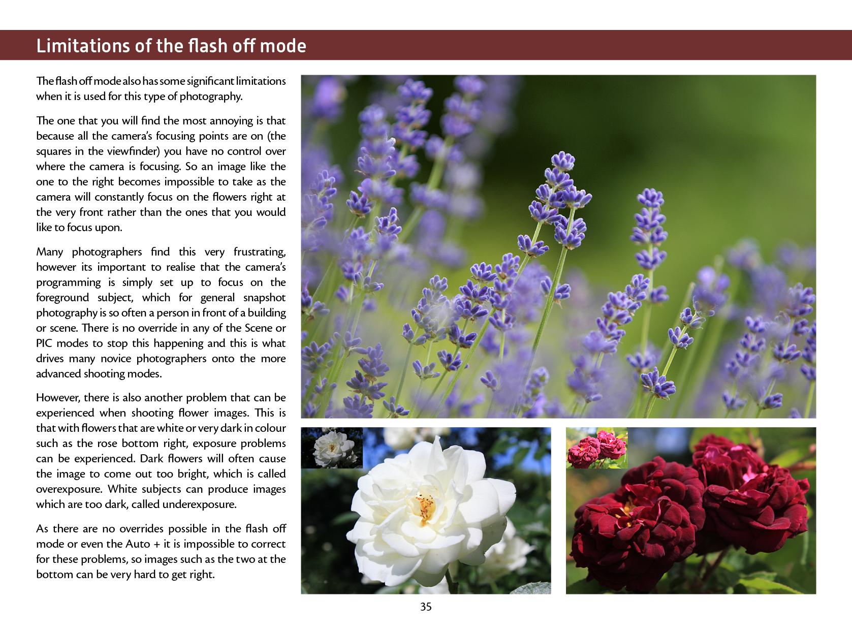 A Beginners Guide To Flower And Garden Photography Eos Training