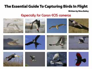 The essential guide to capturing birds in flight