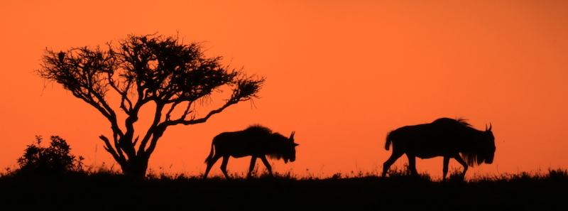 Maasai-Mara-sunset-Brian-Hall